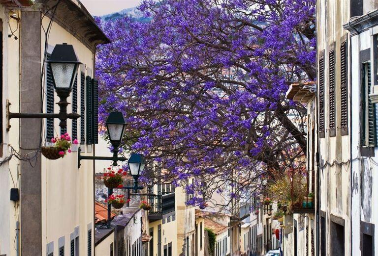 Hlavné mesto Funchal, Madeira, poznávací zájazd, Portugalsko