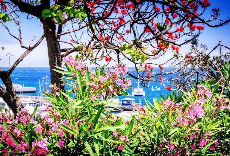 Funchal, Madeira, poznávací zájazd, Portugalsko