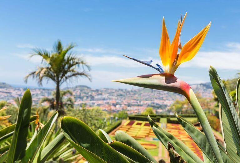 Botanická záhrada, Funchal, Madeira,  poznávací zájazd Portugalsko