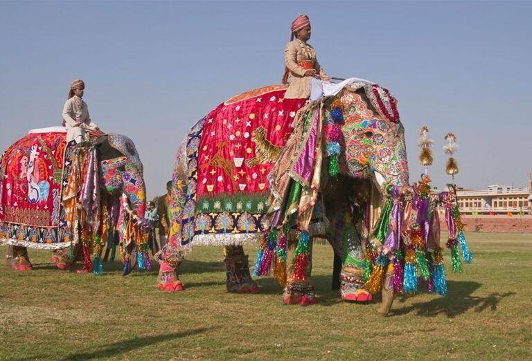 Indické slony