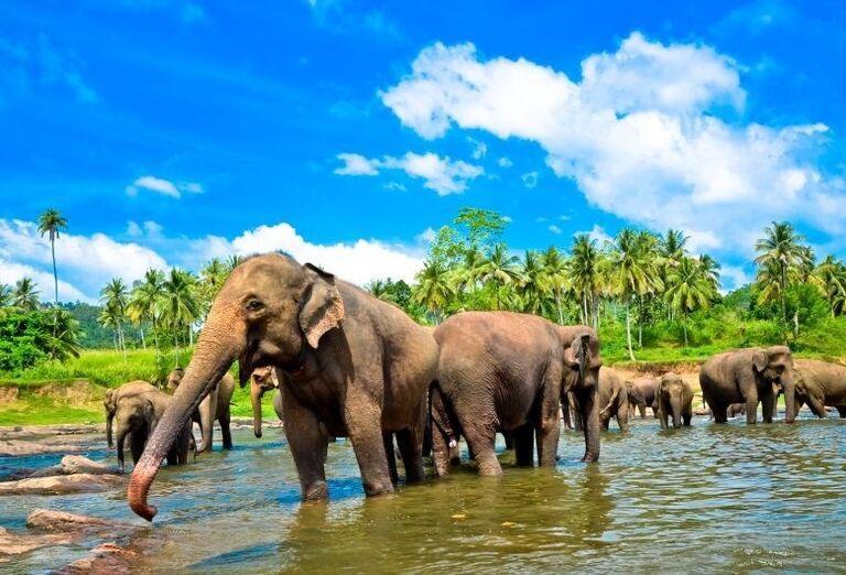 Poobedné kúpanie slonov v Pinnawale