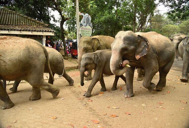 Sloní sirotinec na Srí Lanke