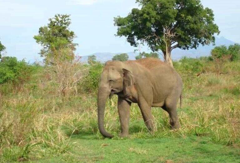 Slonie safari
