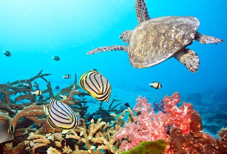 Podmorský svet na Maldivách