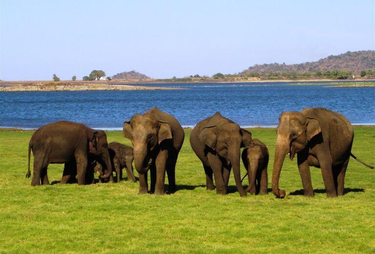 Sloní sirotinec