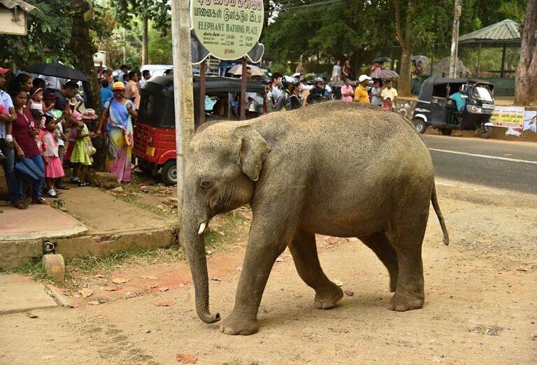 Slon prechádzajúci sa po meste