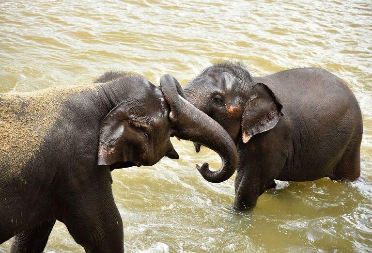 Kúpanie slonov