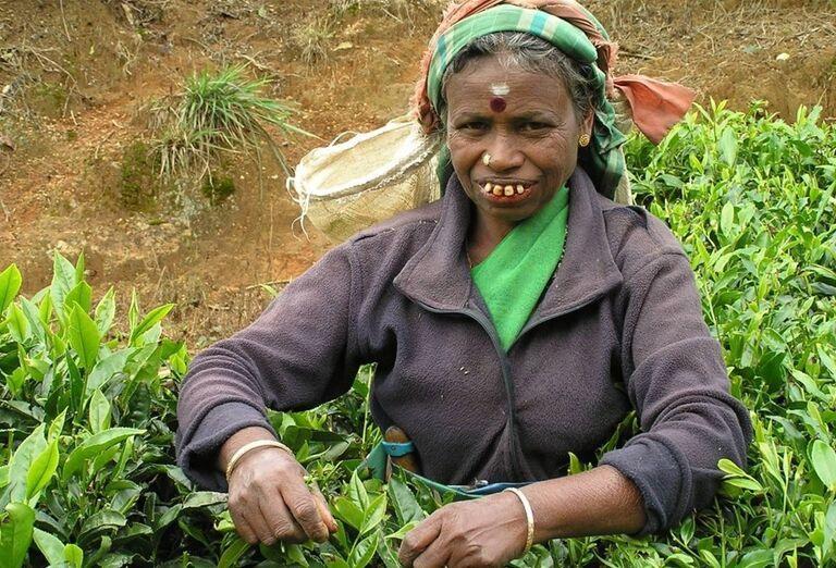 Žena zbierajúca čajové listy