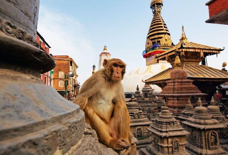 Tradičná opica v Nepále