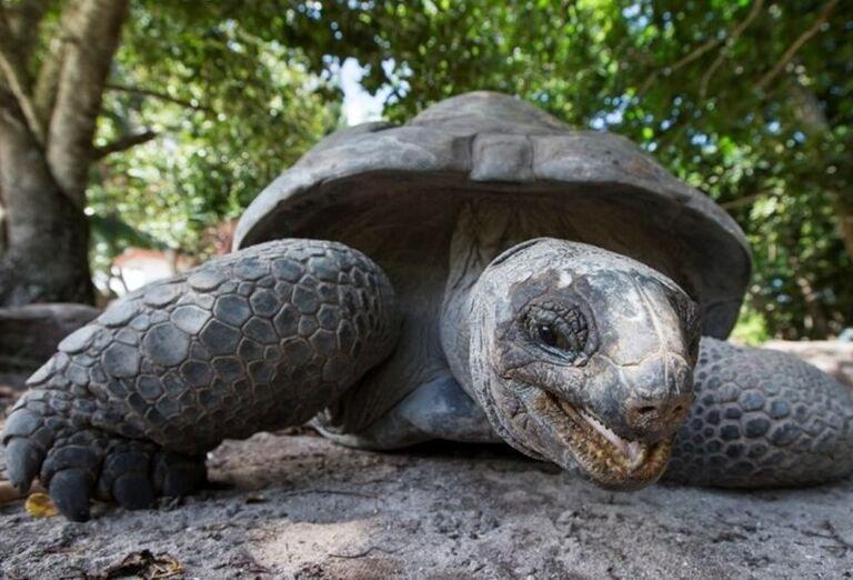 Seychely - skutočný raj na zemi, poznávací zájazd
