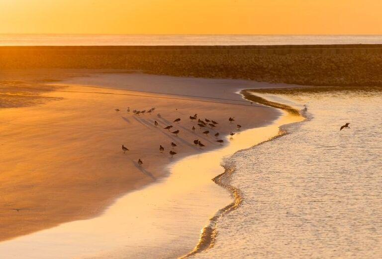 Vtáky pri mori na pláži