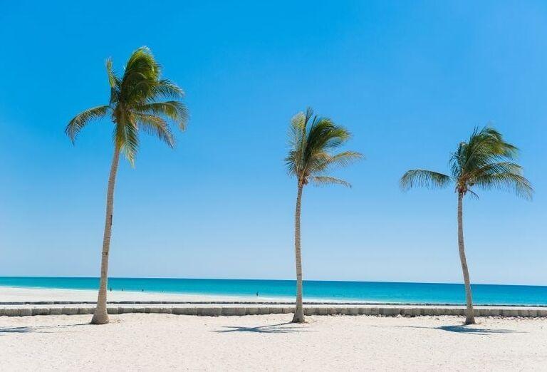 Piesková pláž s palmami