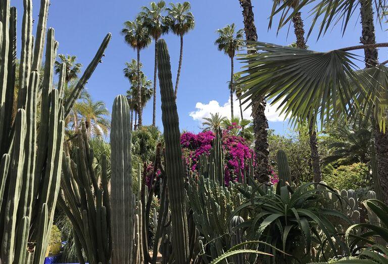Marakéš - city break - kaktusy