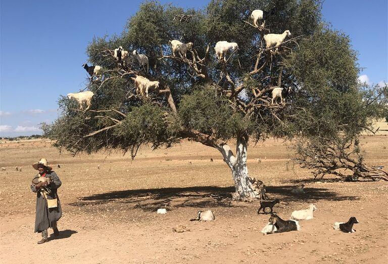 Marakéš - city break- kozy na strome