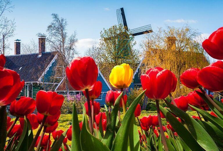 Atrakcie Rozkvitnuté Holandsko