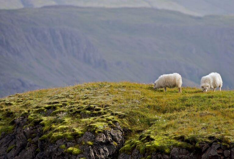 Island príroda