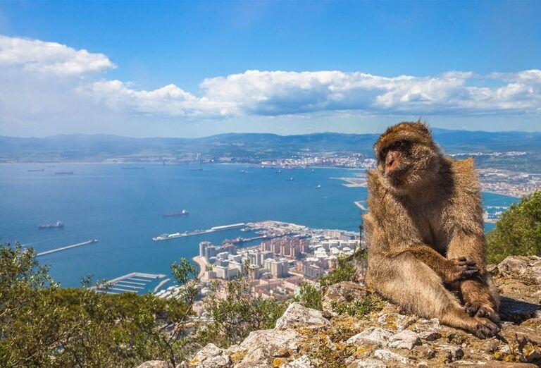 Opica pri Gibraltare