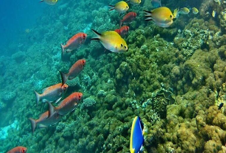 Pestrofarebný podmorský svet