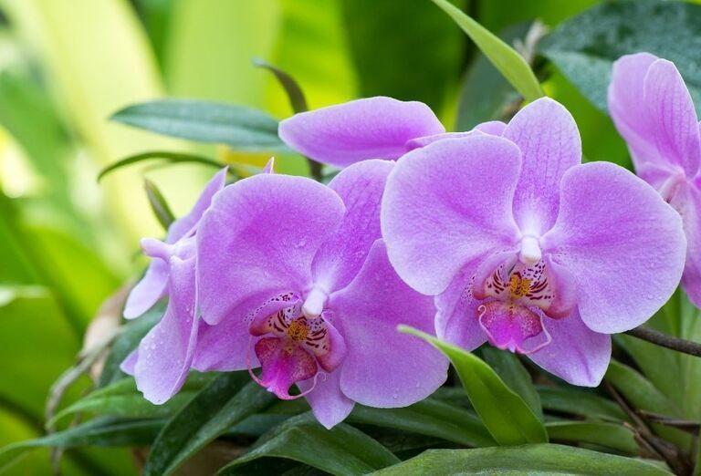 Dni orchideí - výstava vo Viedni