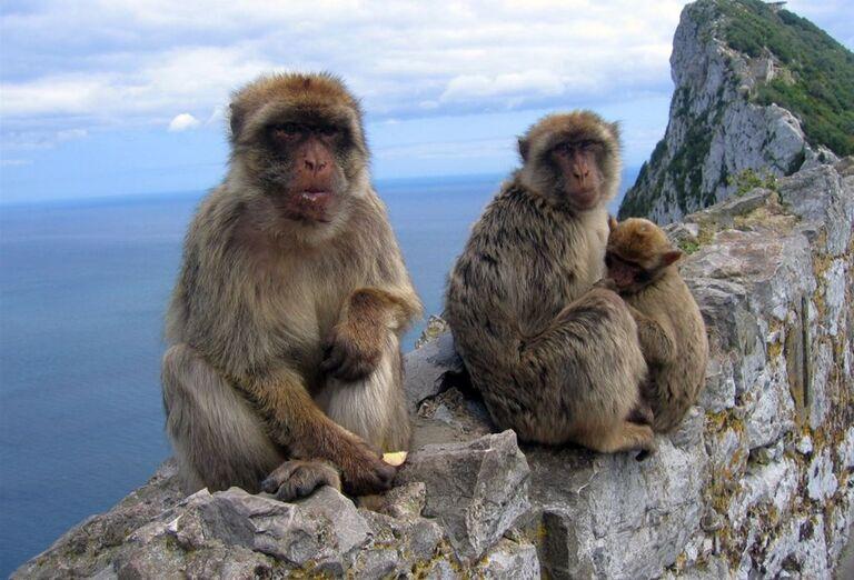 Opice, Gibraltár, poznávací zájazd, Španielsko