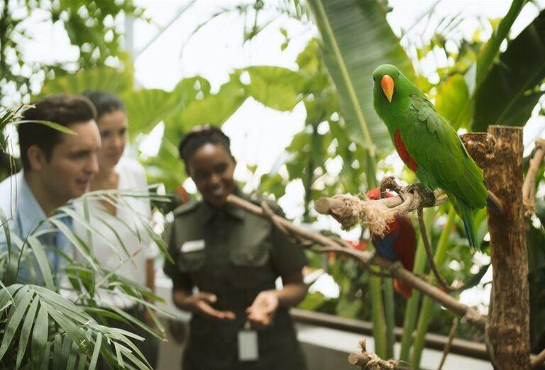Dubaj - svet fantastických atrakcií- papagáj