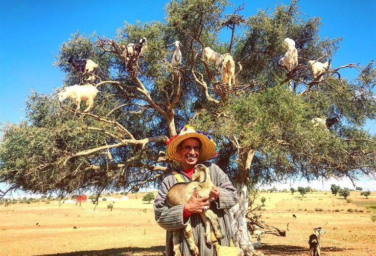 Maroko - križovatka farieb a vôní - kozy na strome