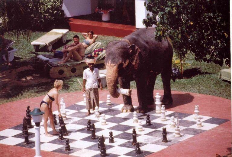 Hotel Club Palm Bay - šachy so slonom