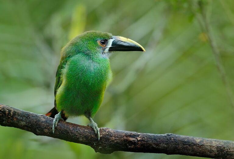 Exotický vták