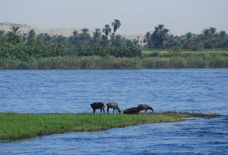 Egypt - plavba po Níle- rieka