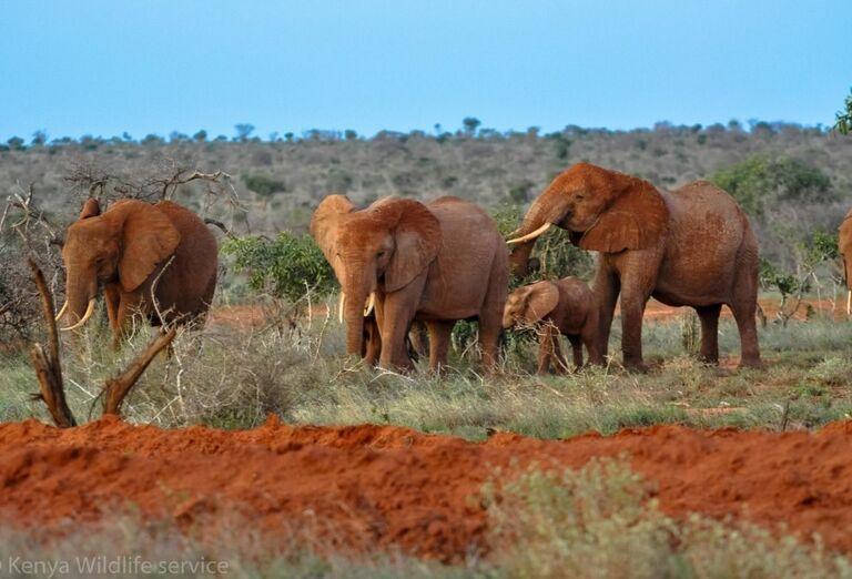 Keňa - Dokonale safari a oddych na bielej pláži- slony