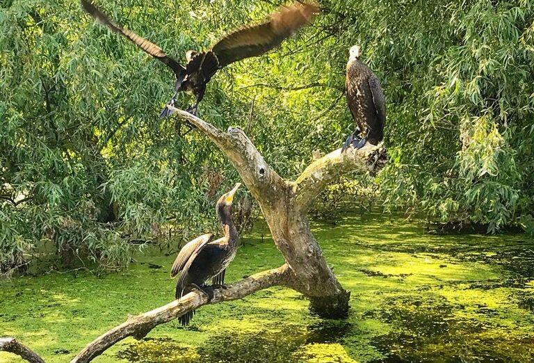 Vtáky na konároch