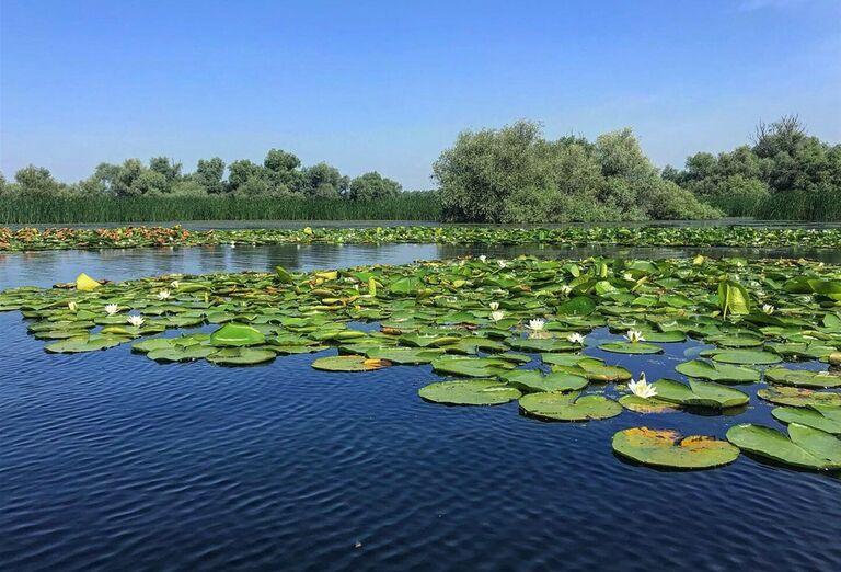 Lekná v jazere v Rumunsku