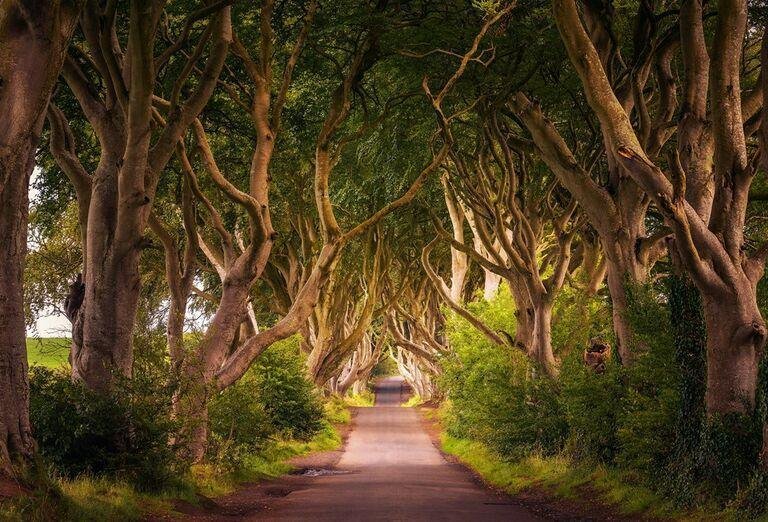 Game of Thrones - cesta skrz les