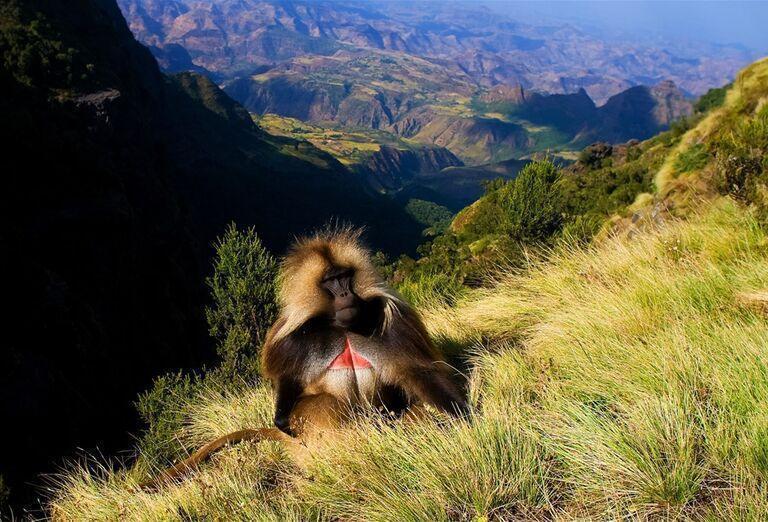 Etiópia - Historická cesta a nádherné pohorie Simien, opica