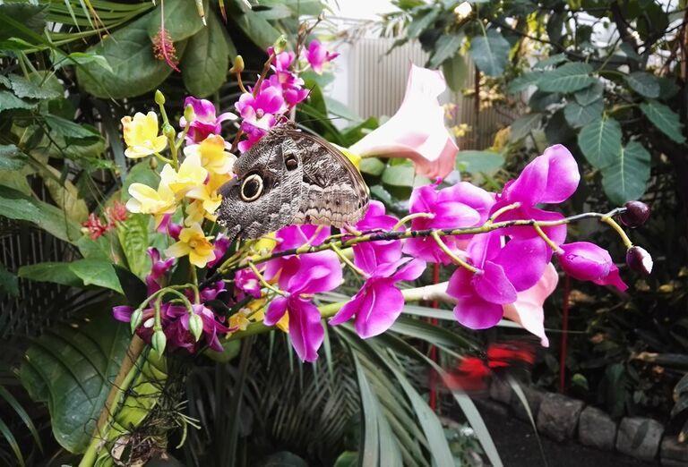 Detské múzeum, Schoenbrunn - kvety