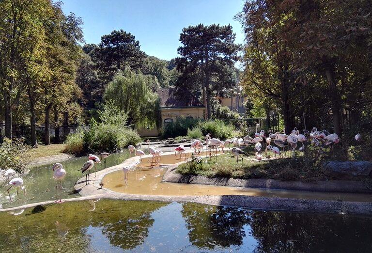 Schönbrunn Zoo a Zámok -