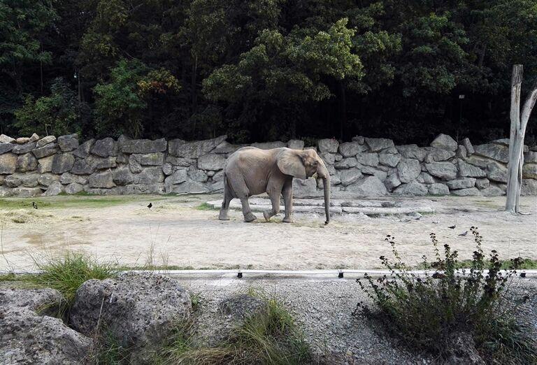 Ostatné Schönbrunn Zoo a Zámok
