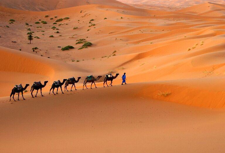 Dubaj - Omán, perly Arabského polostrova - ťavy na púšti