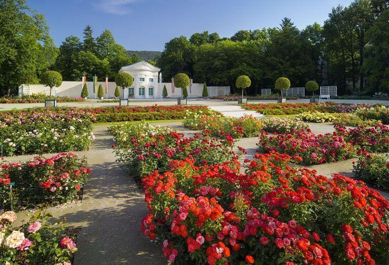 Ruže, Baden bei Wien