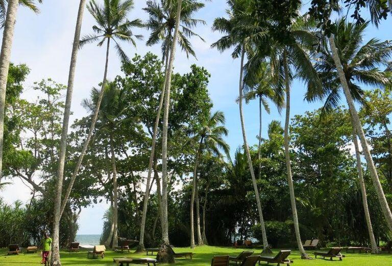 Záhrada v rezorte Surya Lanka Ayurveda Beach