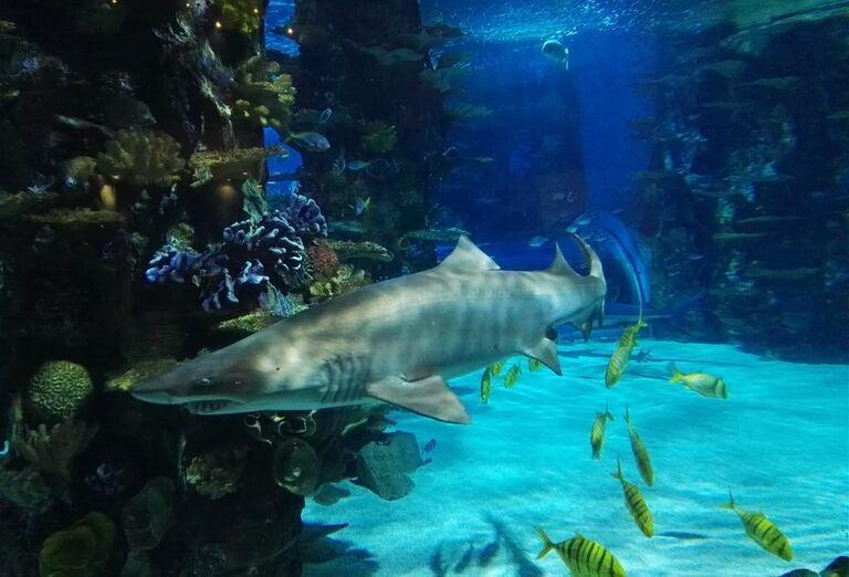 Žraloky v Tropikárium - Budapešť