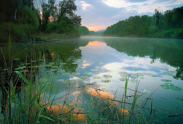 Tajomstvá lužných lesov - lekná na jazere