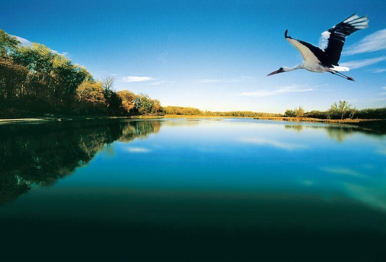 Tajomstvá lužných lesov - bocian vzlieta