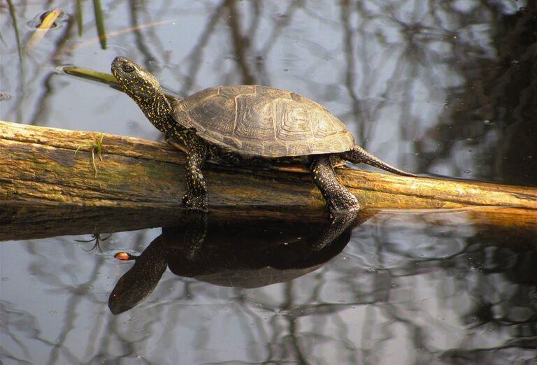 Tajomstvá lužných lesov - korytnačka