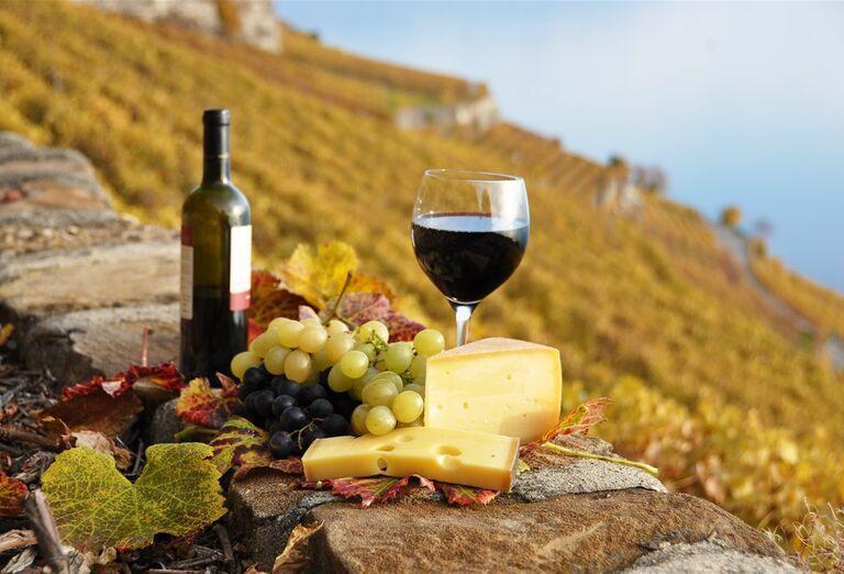 Víno- poznávací zájazd, Taliansko