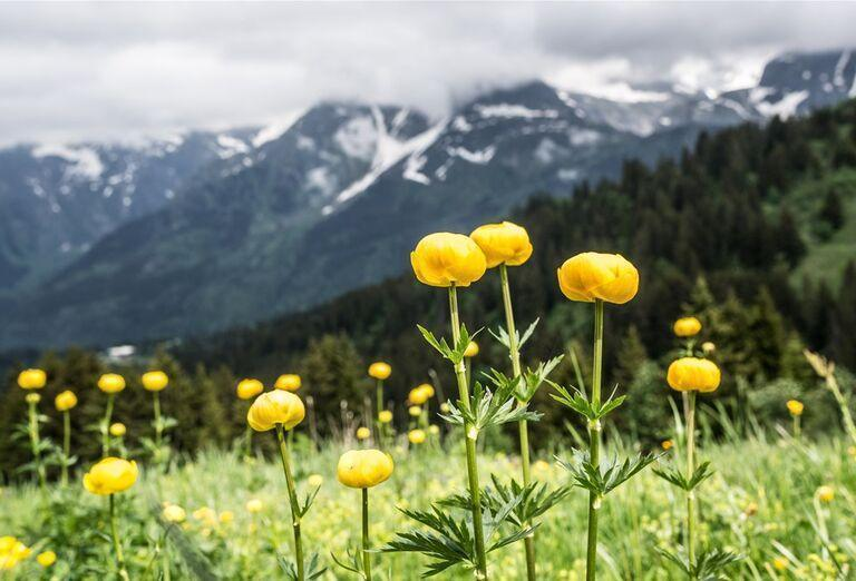 Na ceste krajom Viedenských Álp - kvety na lúke