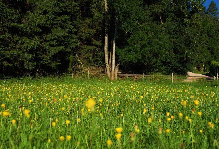 Na ceste krajom Viedenských Álp- kvety na lúke