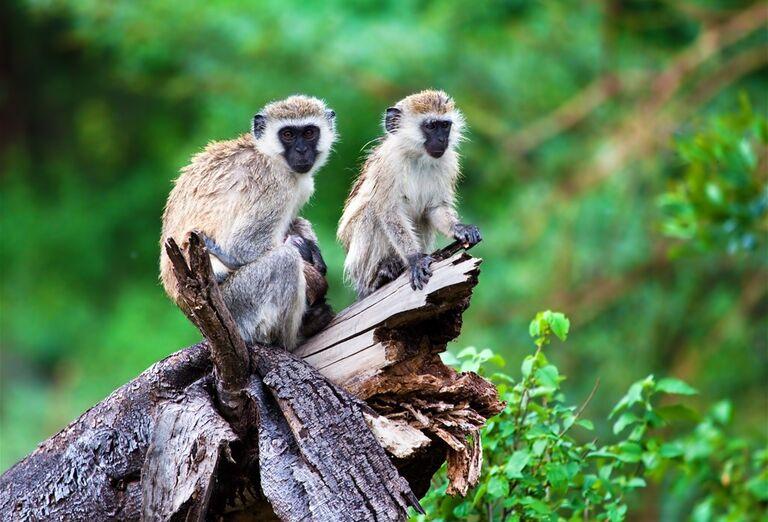 Atrakcie Tanzánia a Zanzibar – africké dobrodružstvo