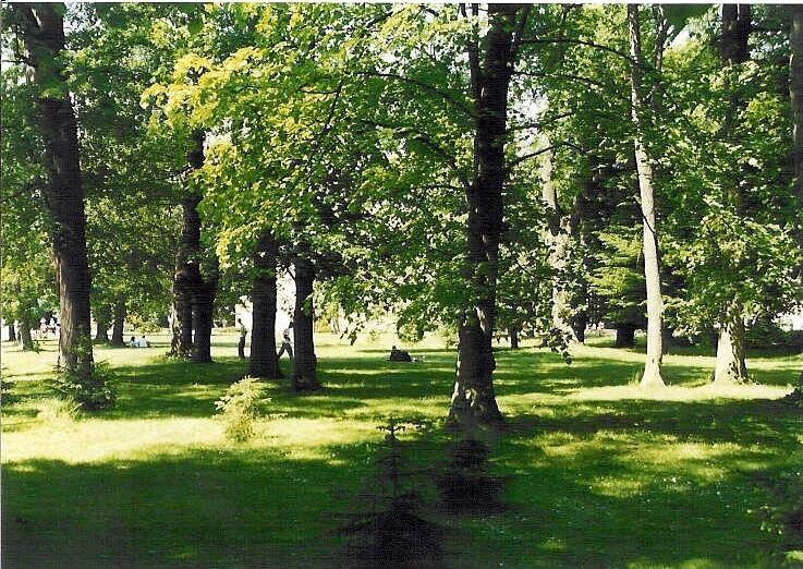 Lesík s množstvom stromov pri liečebnom dome