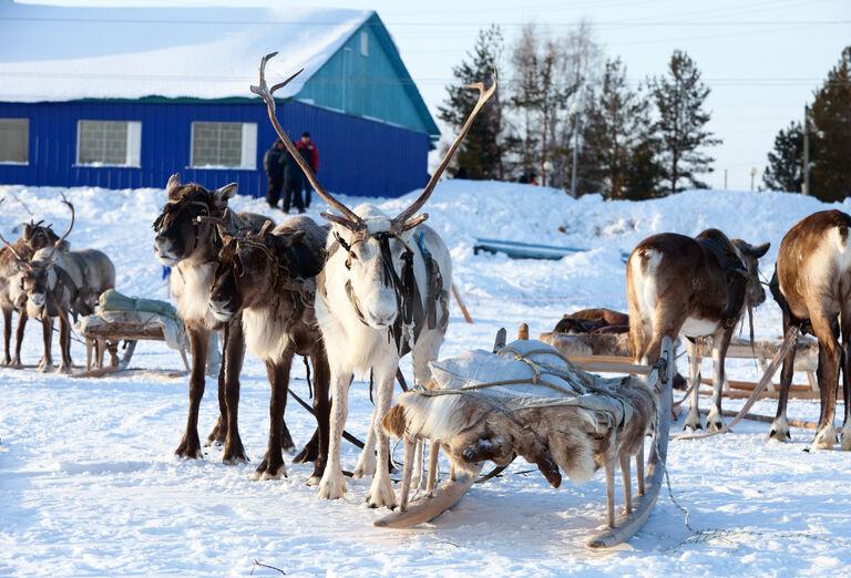 Laponsko - trip za polárnou žiarou, poznávací zájazd